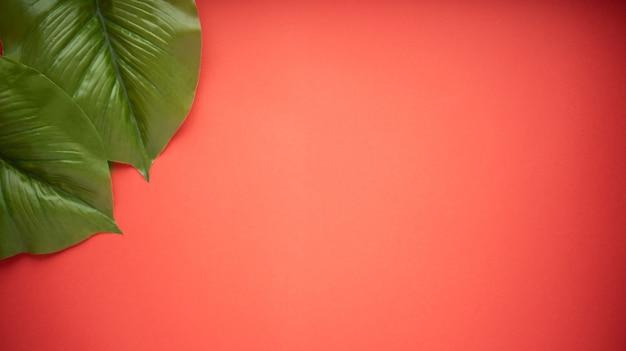 Grote felgroene bladeren van de ficusboom op een felrode achtergrond. plat leggen. Premium Foto