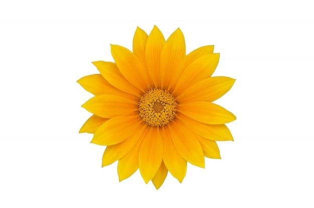 Grote gele bloem die op witte achtergrond wordt geïsoleerd Premium Foto