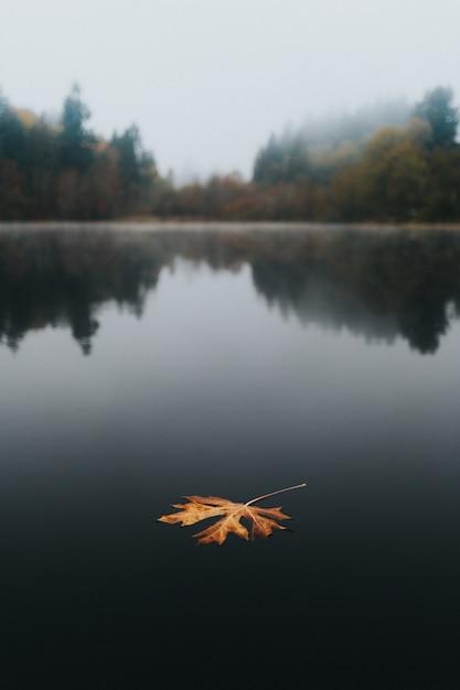 Grote gouden herfstblad drijvend in een meer met een prachtige natuurlijke achtergrond en reflecties Gratis Foto