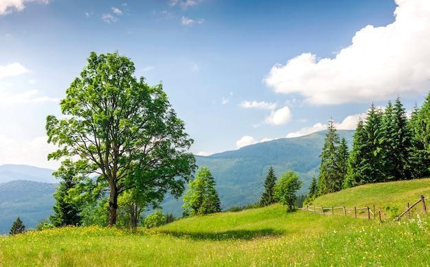 Grote groene boom die zich op grasweide bevindt in bergen Premium Foto