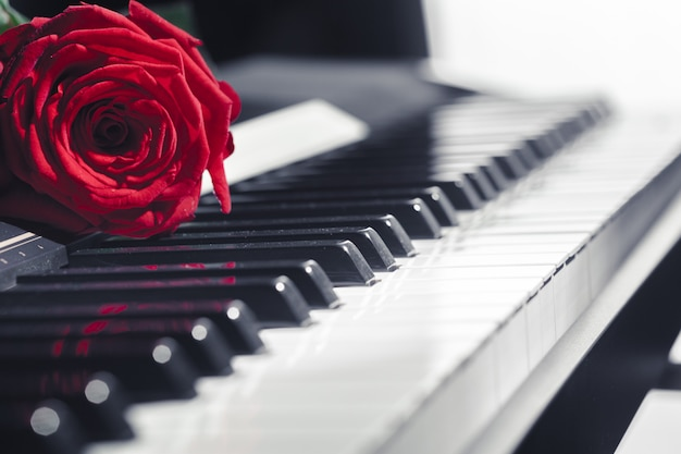 Grote piano met rode roos Premium Foto