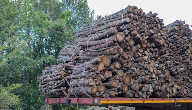 Grote stapel houten stammen, steeneiken, typische boom van centraal sardinië Premium Foto