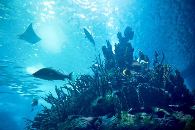 Grote vissen in blauw water Premium Foto