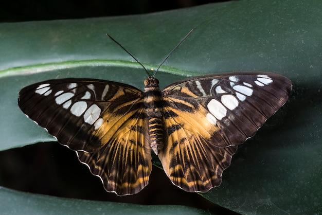 Grote vlinder geplaatst op bladeren Gratis Foto