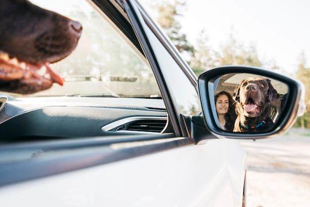 Grote zwarte hond in de auto Gratis Foto