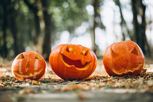 Halloween-pompoenen in een de herfstbos Gratis Foto