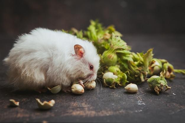 Hamster die hazelnoot op donkerbruin eet. Gratis Foto