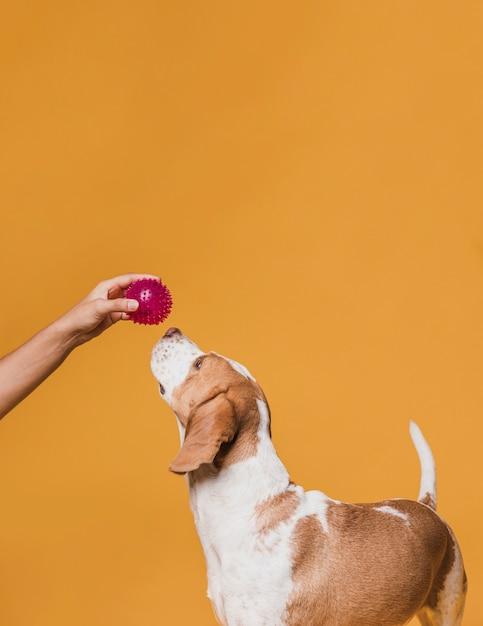 Hand die een rubberbal aanbiedt aan een hond Gratis Foto