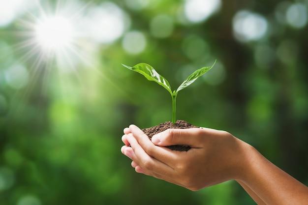 Hand die jonge plant op onduidelijk beeld groene aard houdt. concept eco aarde dag Premium Foto