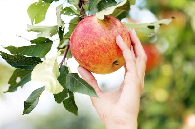 Hand en een appel Gratis Foto