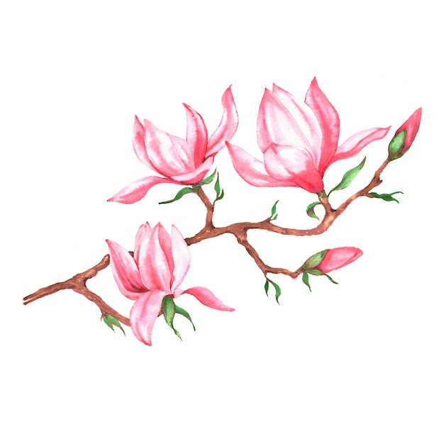 Hand getekend aquarel illustratie van roze magnolia tak Premium Foto