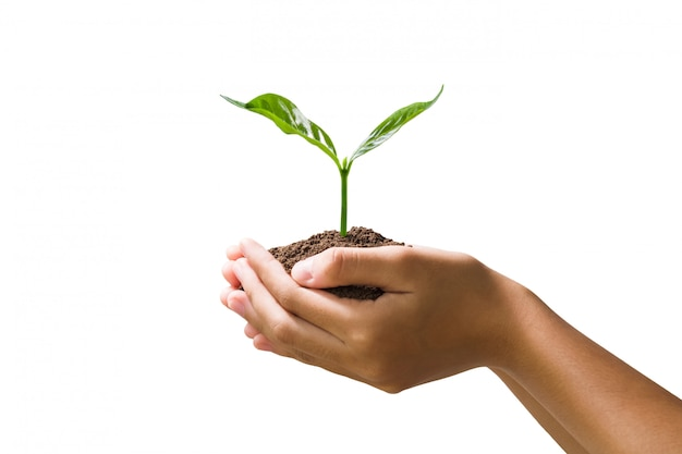 Hand met jonge plant geïsoleerd Premium Foto