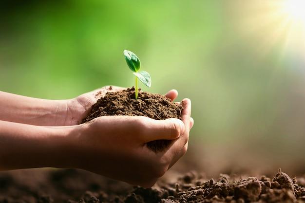 Hand met kleine boom voor aanplant en zonneschijn. eco concept Premium Foto