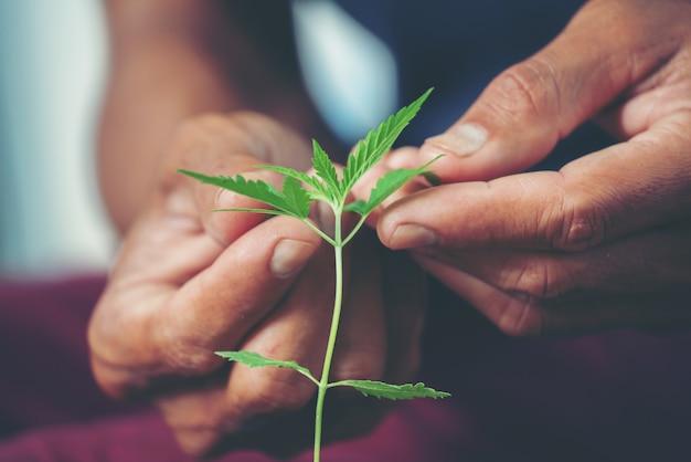 Hand met marihuanablad Premium Foto