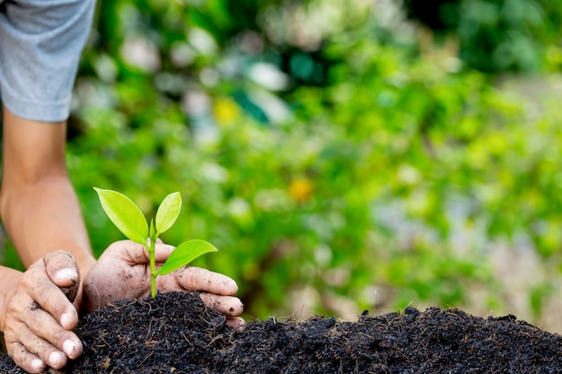 Hand plant jonge plant op aarde, natuurlijke energie en hou van het wereldconcept. Premium Foto