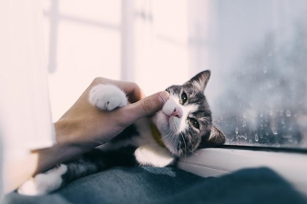 Hand streelde kat Premium Foto