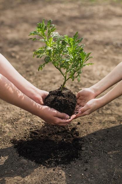 Handen aanplant boom Gratis Foto