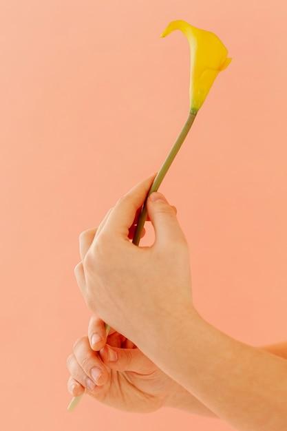 Handen die calla leliebloem houden Gratis Foto