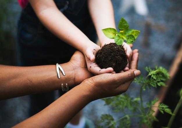 Handen met een boom om te planten Premium Foto