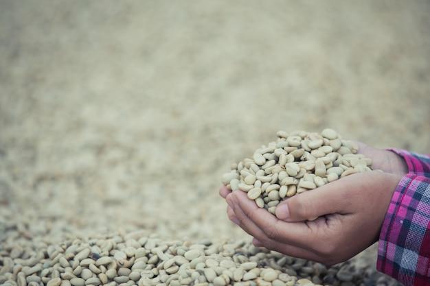 Handen met koffiebonen op koffiebonen die zijn gedroogd Gratis Foto
