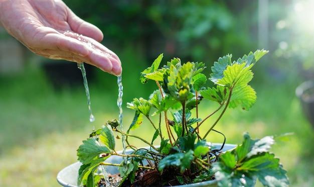Handen van boer groeien en voeden boom groeien op vruchtbare grond Premium Foto