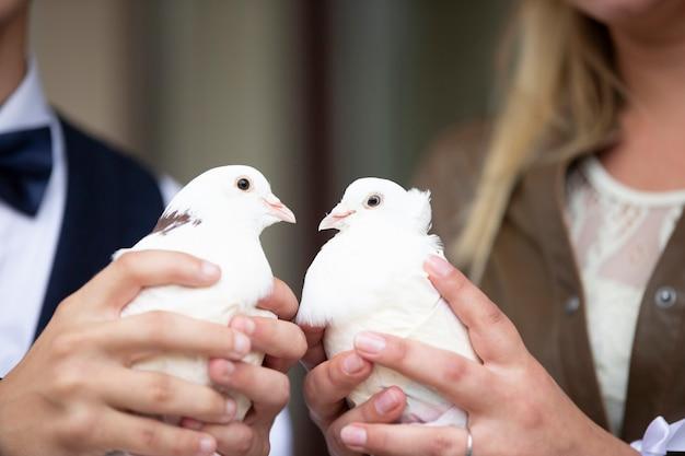 Handen van de bruid en bruidegom houden witte huwelijksduiven vast. Premium Foto