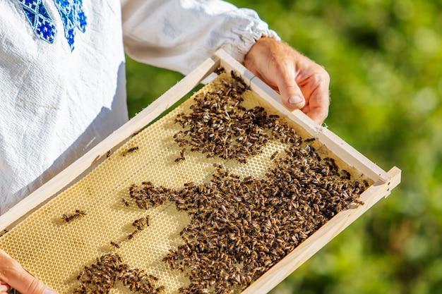 Handen van de mens toont een houten frame met honingraten op de achtergrond van groen gras in de tuin Premium Foto