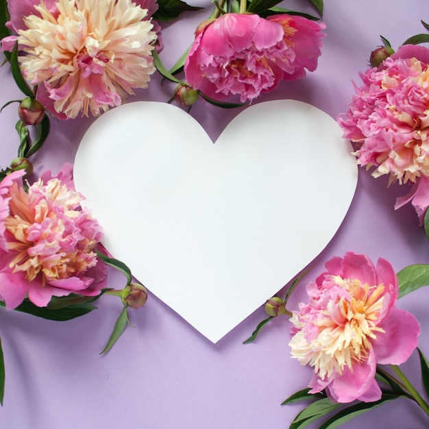 Hart frame. roze pioenrozen op paarse achtergrond Premium Foto