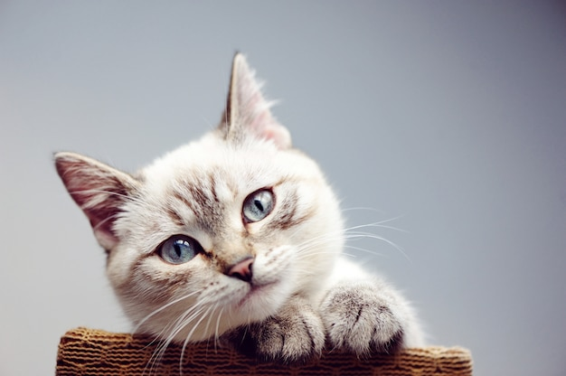 Headshot close-upportret van een kat Premium Foto