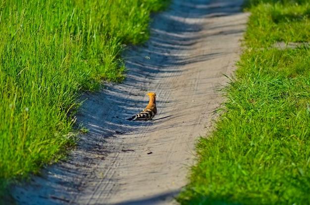 Heerlijke hop op een bosweg Premium Foto