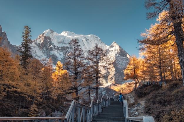 Heilige xiannairi-berg met het bos van de de herfstpijnboom in yading Premium Foto