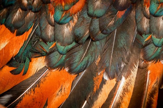 Heldere kleurrijke veren van een vogel Premium Foto