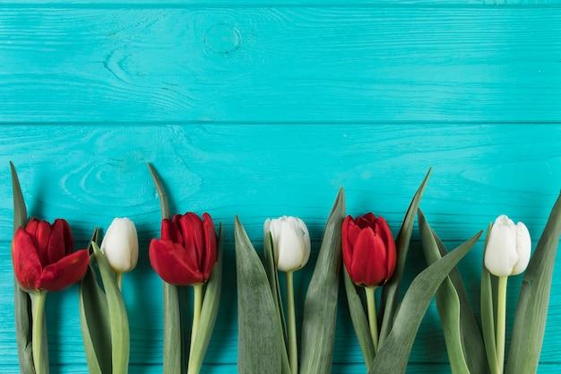 Heldere rode en witte tulpen op turquoise houten gestructureerde oppervlak Gratis Foto
