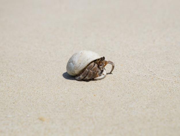 Heremietkreeftenkonijn op strand Premium Foto