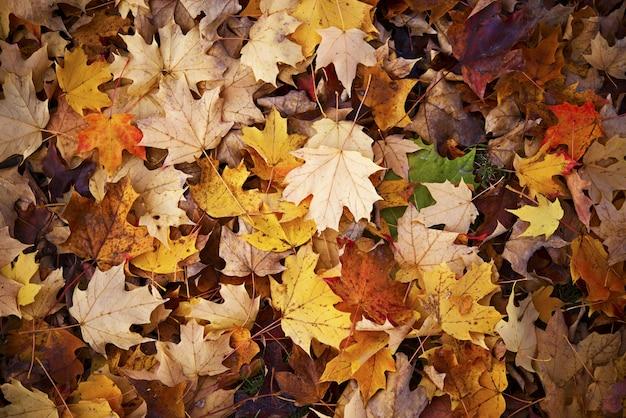 Herfst achtergrond Gratis Foto