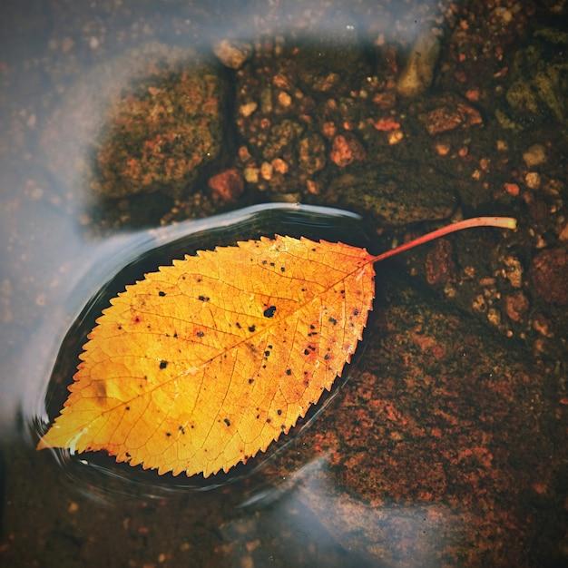 Herfst. een prachtig kleurrijk blad in de kreek. natuurlijke seizoensgebonden gekleurde achtergrond Gratis Foto