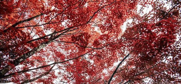 Herfst esdoorn blad aard vers Premium Foto