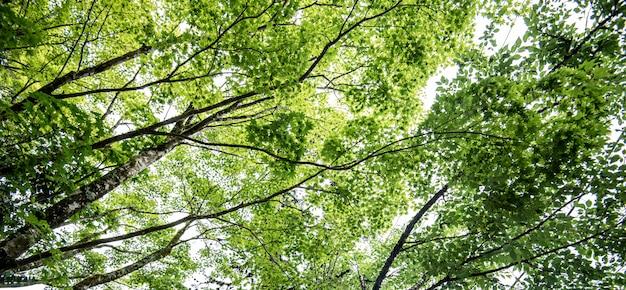 Herfst esdoornblad aard verse achtergrond Premium Foto