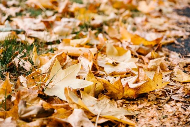 Herfst geel blad Gratis Foto