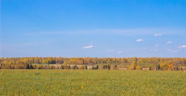 Herfst geel bos en veld. blauwe hemel met wolken boven het bos. de schoonheid van de natuur in de herfst. Premium Foto