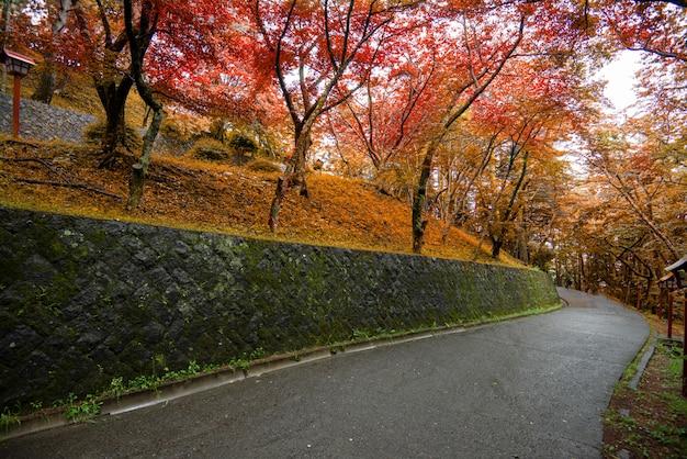Herfst kleurrijke rode esdoornblad Premium Foto