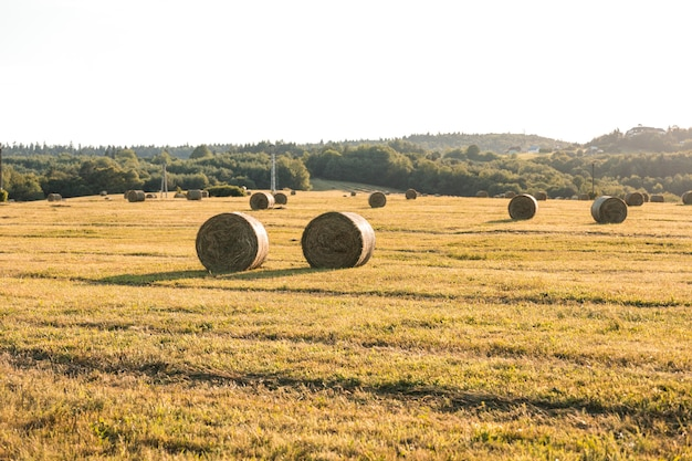 Herfst landschap met hays veld Gratis Foto