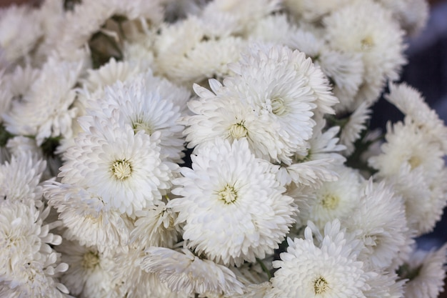 Herfst of herfst bloemen achtergrond, witte bloemen Premium Foto