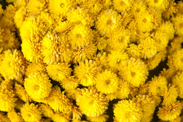Herfst of herfst bloemenachtergrond Premium Foto
