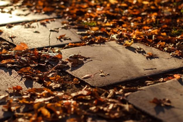 Herfst pad van tegels in het park Premium Foto