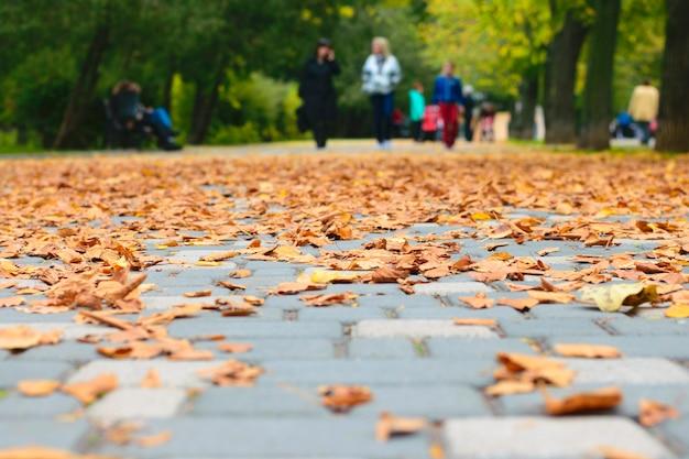 Herfst parklandschap. droge bladeren onder je voeten. selectieve aandacht Premium Foto
