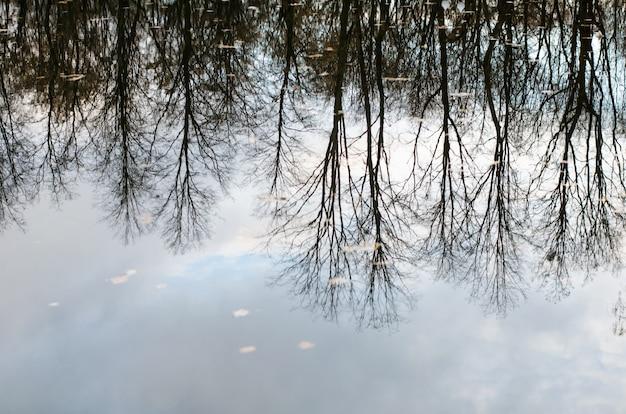 Herfst rustige weerspiegeling van naakte kale bomen weerspiegeld ondersteboven in kalme donkere waterspiegel Premium Foto