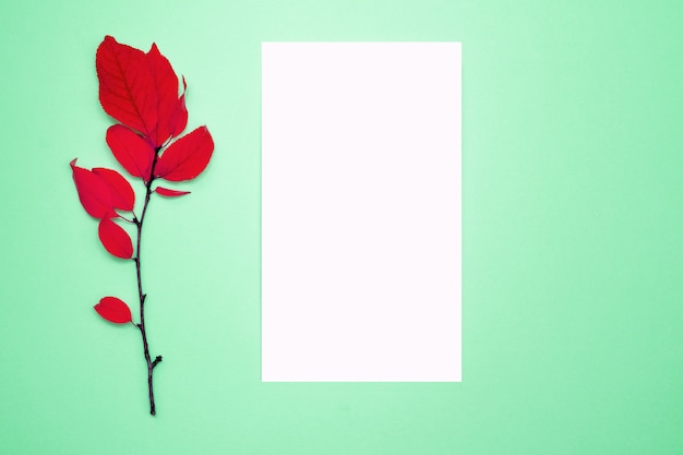 Herfst samenstelling, frame, blanco papier. tak met rode bladeren, pruim, op een lichtgroene achtergrond. Premium Foto