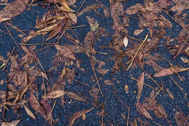 Herfst verlaat plas blauw asfalt Premium Foto