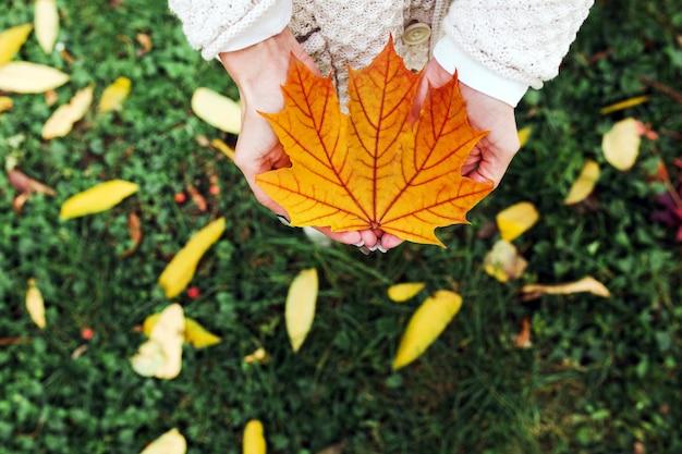 Herfstbladeren in handen van de vrouw Gratis Foto